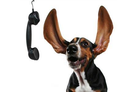 Contact Geraldton Dog Rescue